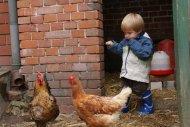 Leander im Hühnerhaufen