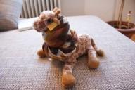 ...und die Giraffe hat Halschmerzen